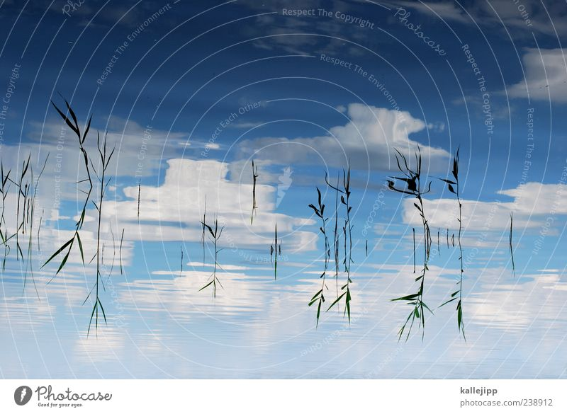 Sky Nature Water Plant Clouds Environment Landscape Grass Lake Waves Climate Natural Beautiful weather Lakeside Bay Common Reed