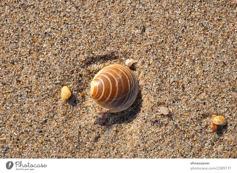 Shell on the sand Design Relaxation Vacation & Travel Tourism Summer Sun Beach Ocean Nature Sand Coast Natural Idyll Tropical seashell marine background