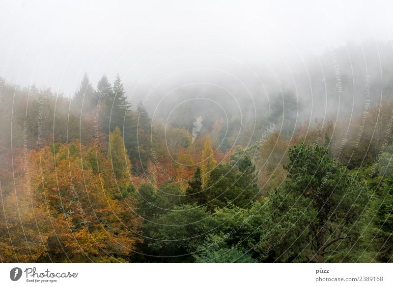 cloud forest Vacation & Travel Tourism Trip Adventure Mountain Hiking Environment Nature Landscape Plant Autumn Weather Fog Tree Wild plant Forest Island