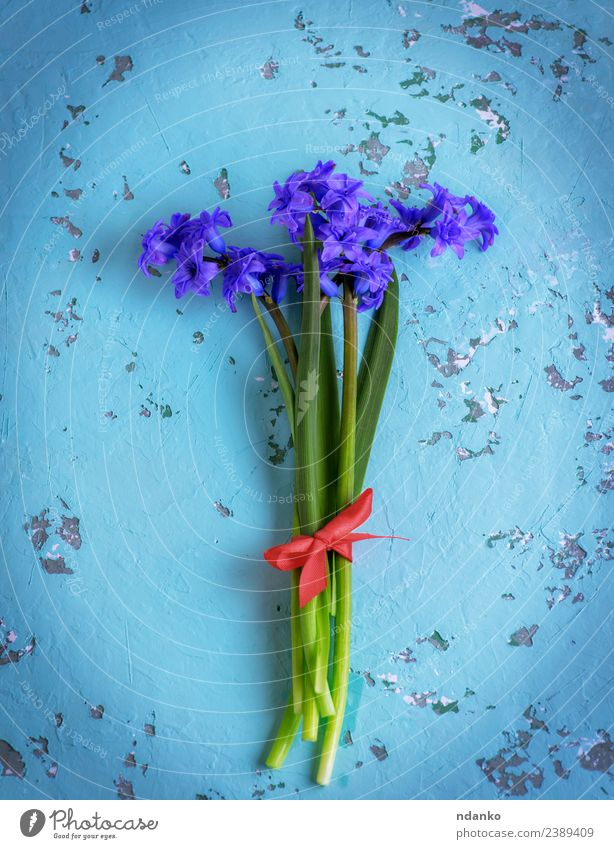 bouquet of blue hyacinths Feasts & Celebrations Mother's Day Birthday Nature Plant Spring Flower Blossom Blossoming Fresh Natural Blue Green Colour background