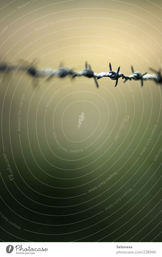 Threat Fence Barrier Captured Aggression Knot Thorny Spine Barbed wire Barbed wire fence Confine