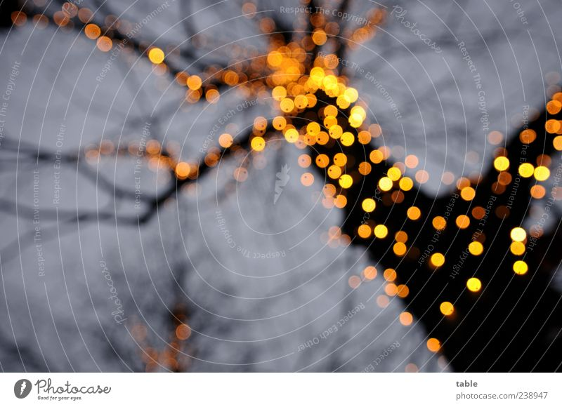 pear tree Electric bulb Lamp Environment Nature Sky Tree Decoration Glittering Illuminate Dark Blue Yellow Gold Black Emotions Anticipation Romance