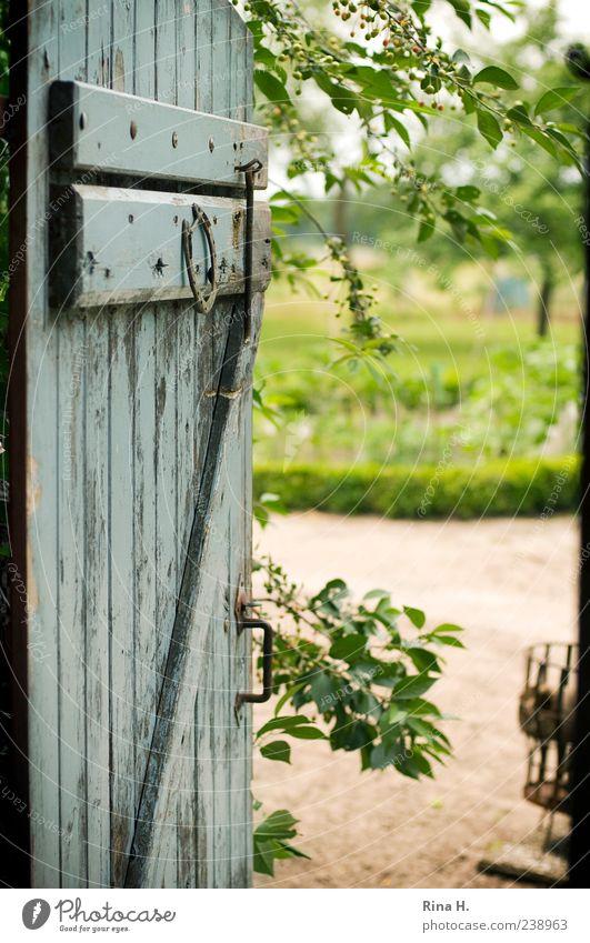 Old Summer Calm Garden Open Door Authentic Idyll Beautiful weather Vantage point Farm Twig Rural Country life Depth of field Wooden door