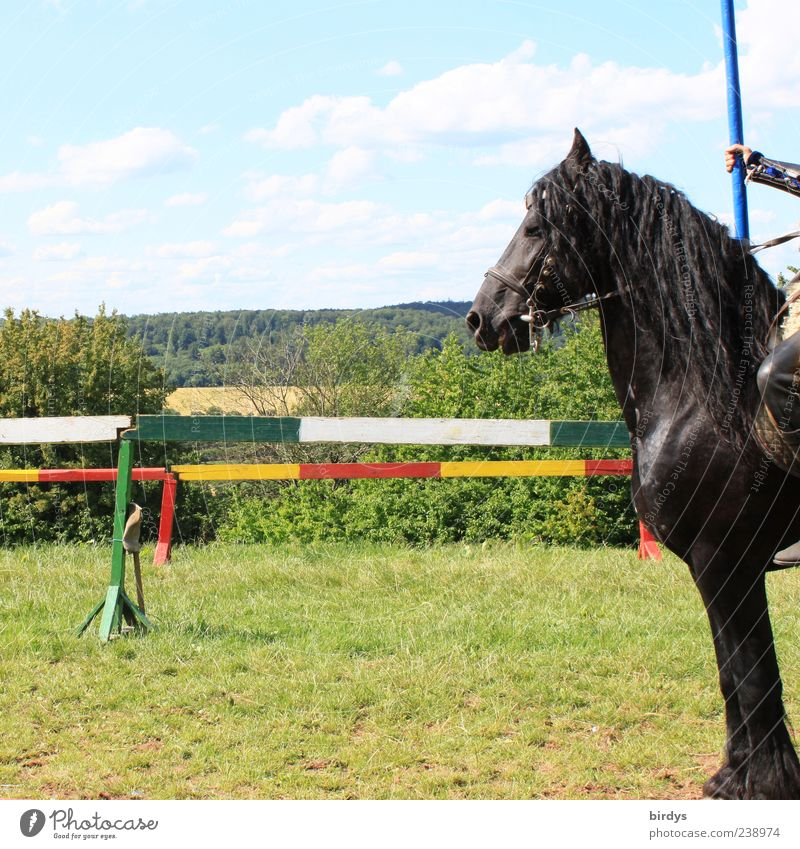 Animal Black Exceptional Glittering Stand Esthetic Beautiful weather Force Shows Horse Team Fence Brave Festival Sporting event Pride