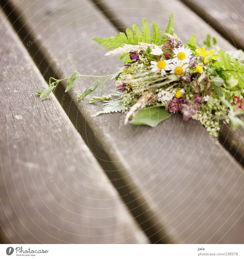 Beautiful Plant Flower Leaf Grass Small Blossom Friendship Together Warm-heartedness Bouquet Wooden board Sympathy Wooden stake Compassion Meadow flower