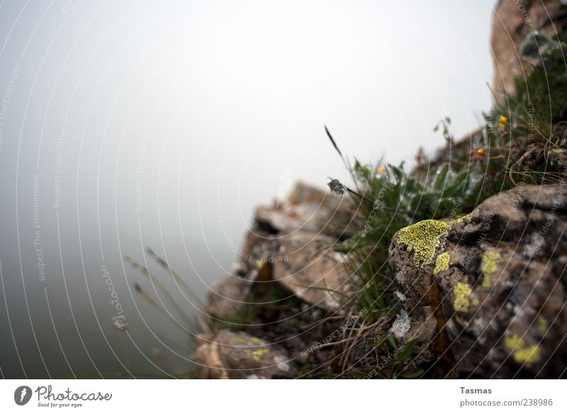 Nature Plant Relaxation Flower Grass Rock Fog Elements Moss Wild plant