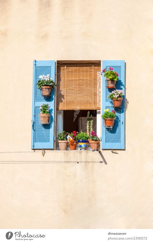 Window with blue shutters and flowers Style Beautiful Vacation & Travel Summer House (Residential Structure) Decoration Culture Flower Building Architecture