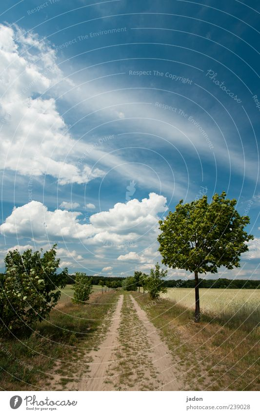 away into the blue. Nature Landscape Earth Sky Clouds Beautiful weather Wind Tree Bushes Agricultural crop Field Street Lanes & trails Blue White Calm Hope
