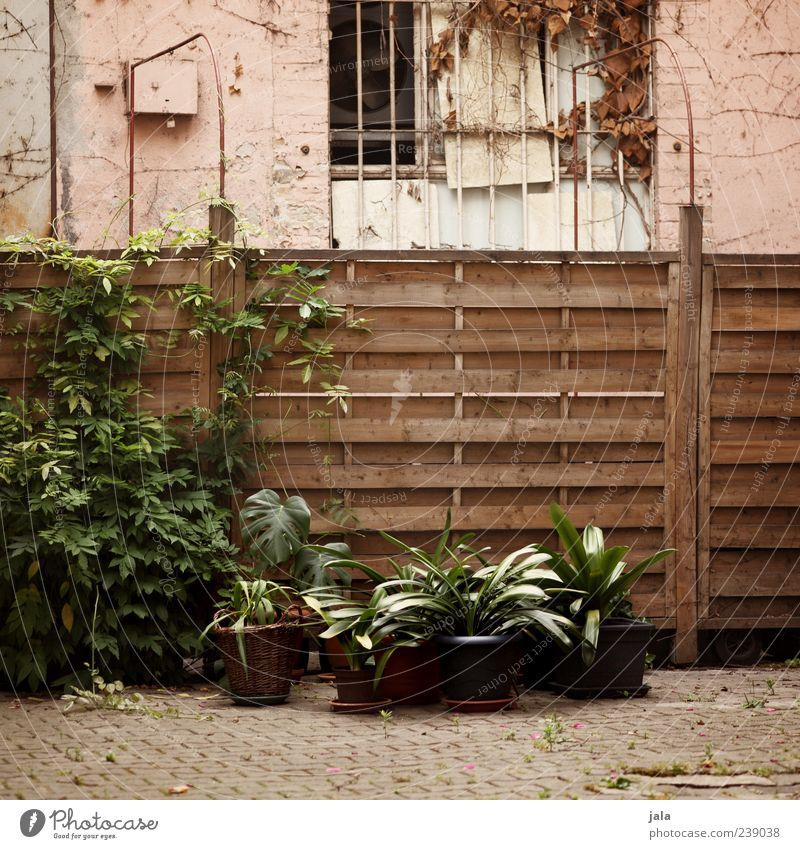yard Plant Bushes Foliage plant Pot plant House (Residential Structure) Manmade structures Building Window Fence Gloomy Courtyard Colour photo Exterior shot