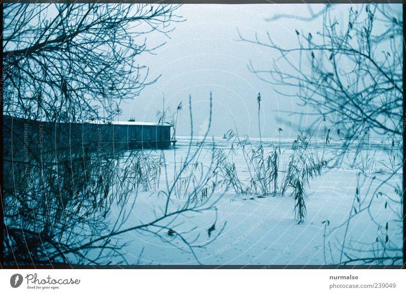 genuine Trist IV Far-off places Environment Nature Landscape Winter Ice Frost Snow Common Reed Coast River bank Havel Watercraft Houseboat Dark Cold Calm Frozen