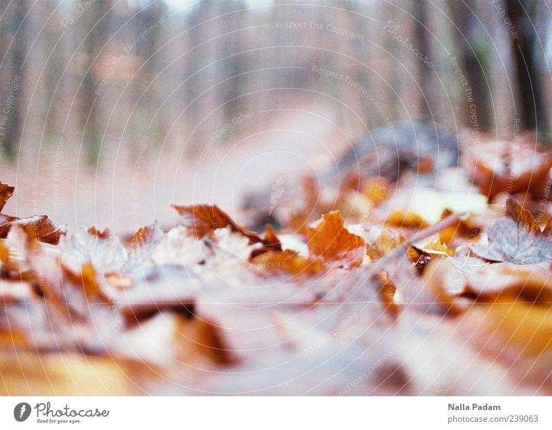 Nature Plant Leaf Forest Autumn Gold Footpath Autumn leaves Copy Space Autumnal colours Lanes & trails