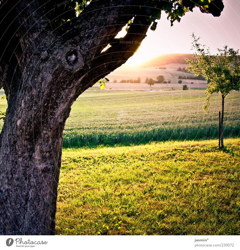 Nature Tree Sun Far-off places Environment Landscape Meadow Warmth Spring Bright Weather Field Beautiful weather Pasture Tree trunk Plant