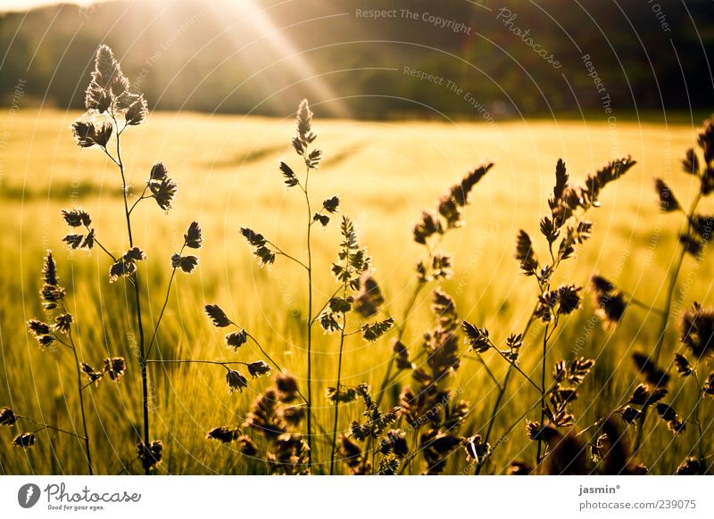 Nature Sun Plant Summer Far-off places Environment Yellow Landscape Grass Bright Weather Field Gold Beautiful weather