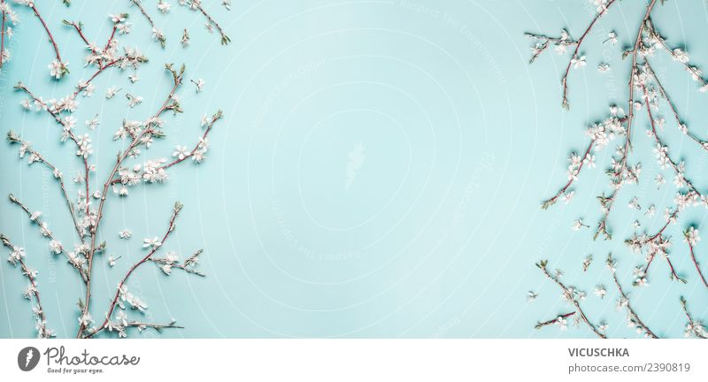 Spring cherry blossom twigs on light blue Style Design Summer Nature Plant Leaf Blossom Decoration Bouquet Flag Background picture Cherry blossom Frame