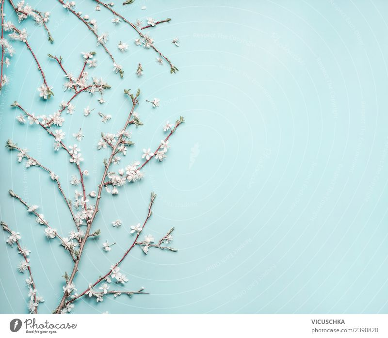 Delicate spring blossoms on light blue background Style Design Nature Plant Spring Flower Leaf Blossom Decoration Bouquet Flag Background picture