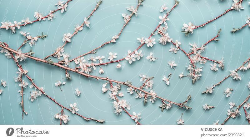 Kischblüten branches on pastel blue Style Design Feasts & Celebrations Mother's Day Wedding Birthday Nature Plant Spring Leaf Blossom Decoration Bouquet Flag
