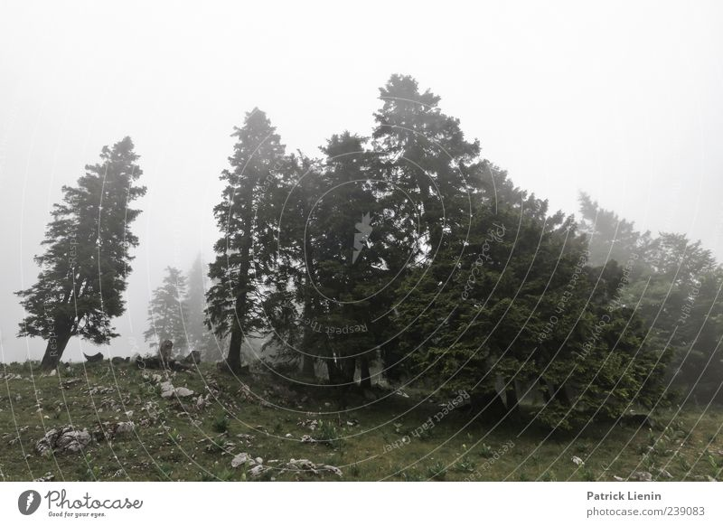 Green and Grey Environment Nature Landscape Plant Elements Air Weather Bad weather Wind Fog Tree Forest Hill Discover Relaxation Moody Inspiration Cold