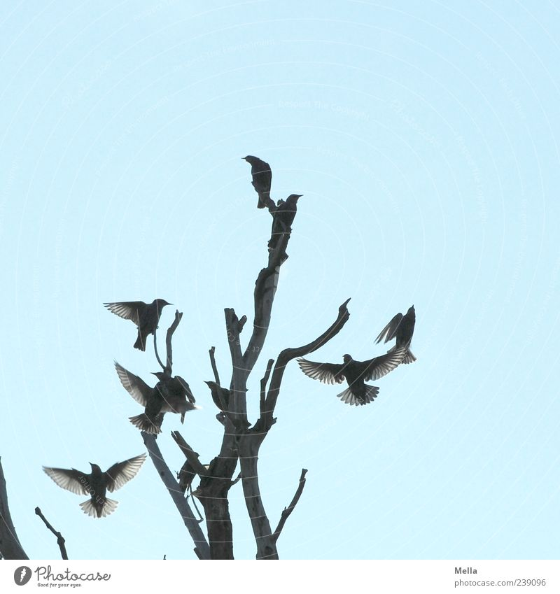 Nature Sky Tree Plant Animal Movement Together Bird Environment Flying Sit Group of animals Wing Branch Natural Treetop