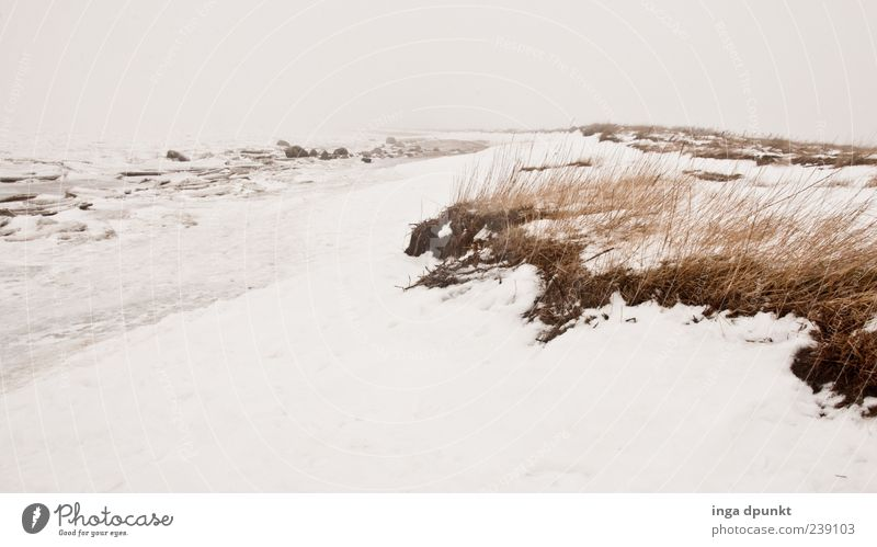 winter beach Vacation & Travel Trip Far-off places Winter Snow Winter vacation Environment Nature Landscape Plant Climate Bad weather Wind Ice Frost Grass Coast
