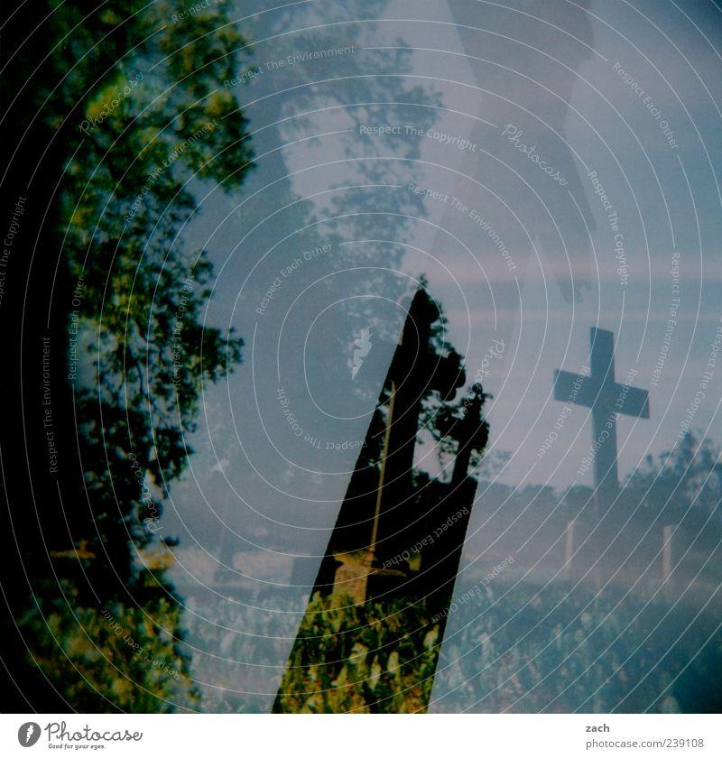 Blue Old Green Plant Tree Dark Sadness Death Religion and faith Stone Fear Church Threat Eternity Sign Grief