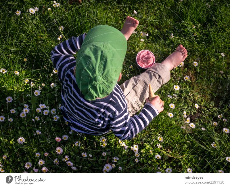 Little boy sitting on a flower meadow with strawberry ice cream Summer Human being Masculine Toddler Boy (child) Infancy 1 1 - 3 years Beautiful weather Daisy