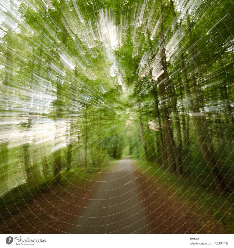 Nature Green Tree Forest Lanes & trails Brown Speed Footpath Long exposure