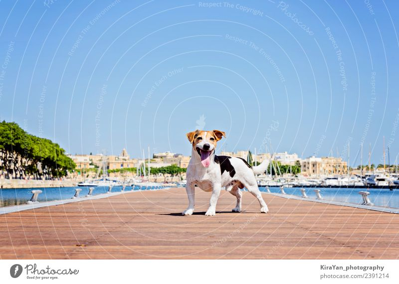 Adult Dog Stands on the wooden pontoon Sky Nature Vacation & Travel Blue Summer Town Landscape Sun Ocean Animal Adults Autumn Funny Coast Wood