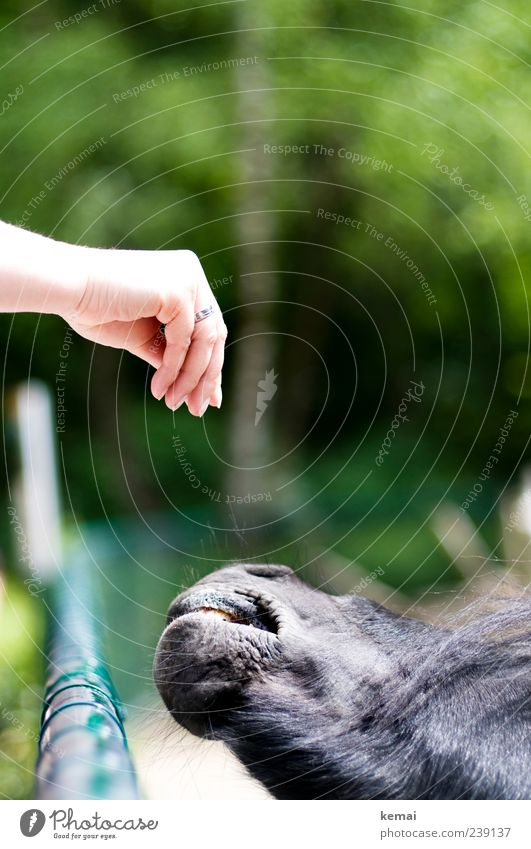 Feeding Hand Fingers Nature Park Animal Farm animal Horse Zoo Petting zoo Snout Head 1 Fence Green Trust Love of animals Appetite Pony Colour photo