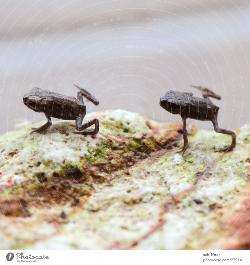 Animal Small Jump Funny Baby animal Together Pair of animals Cute Attachment Frog Aquarium Gymnastics Macro (Extreme close-up) Trend-setting Synchronous