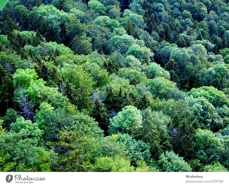 Nature Blue White Green Tree Plant Summer Black Forest Yellow Landscape Dark Bushes Beautiful weather Infinity Fir tree
