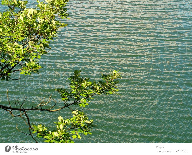 Nature Water Green Vacation & Travel Tree Plant Summer Relaxation Landscape Lake Waves Uniqueness Branch Oak tree Seasons Recreation area