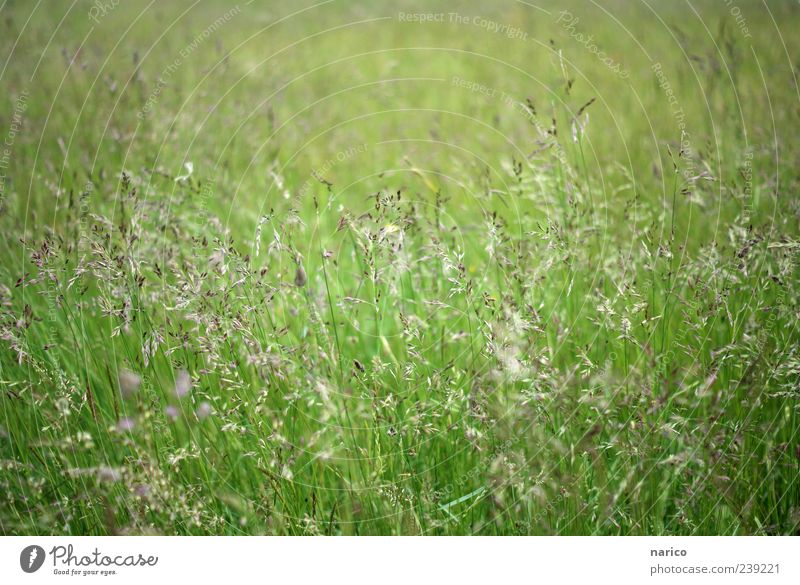 confused grass Nature Plant Summer Grass Bushes Foliage plant Meadow Movement Blossoming Fresh Green Environment Colour photo Exterior shot Day Grass blossom