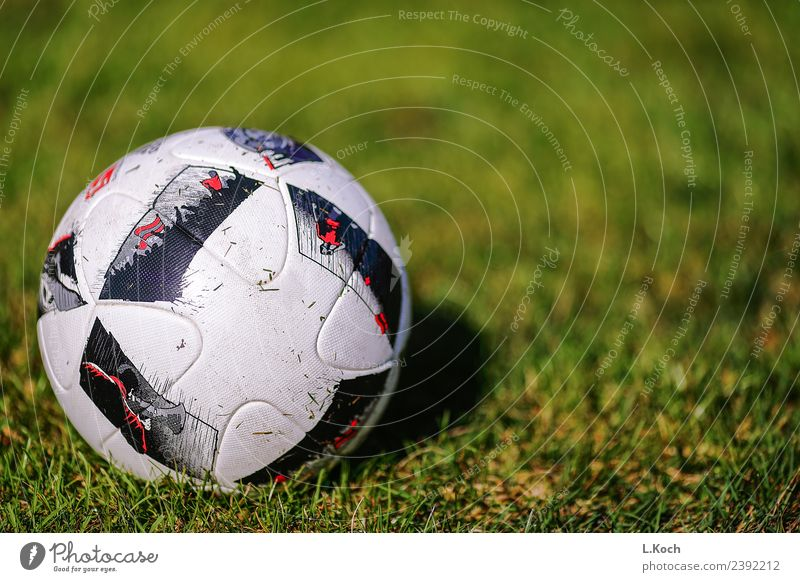 The round one has to go into the square one. Athletic Fitness Playing Sports Ball sports Soccer Football pitch Round Green Passion Team Teamwork Foot ball Lawn