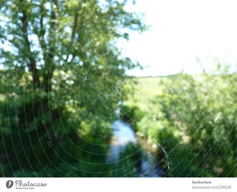 From the perspective of a spider Nature Plant Water Sky Sunlight Summer Beautiful weather Tree Bushes Spider's web Meadow Brook Free Bright Natural Blue Green