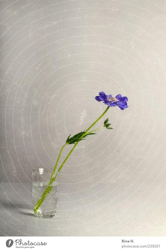 Flower Blossom Style Bright Glass Elegant Esthetic Violet Blossoming Still Life Vase