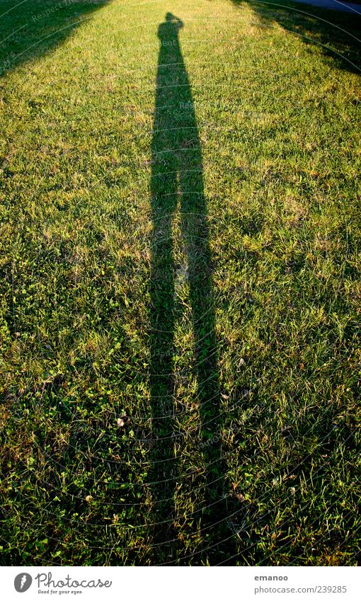 shadow long leg Leisure and hobbies Vacation & Travel Human being Legs 1 Nature Landscape Weather Plant Grass Garden Park Meadow Stand Large Tall Green
