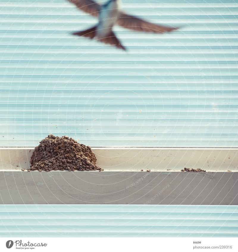 air show Animal Wild animal Bird 1 Line Stripe Movement Flying Swallow Nest Light blue Nest-building Feather Floating Flight of the birds Roof Plastic
