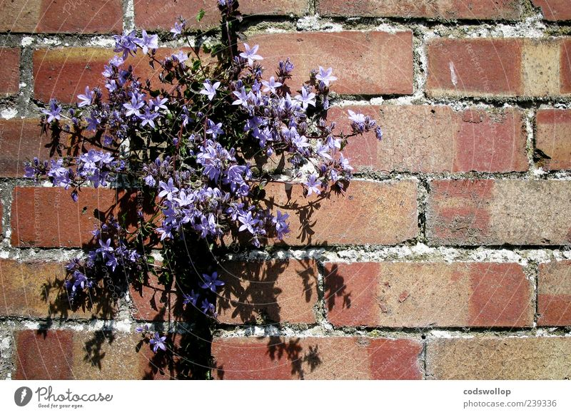 Nature Plant Flower Wall (building) Wall (barrier) Blossom Violet Blossoming Exotic Wild plant
