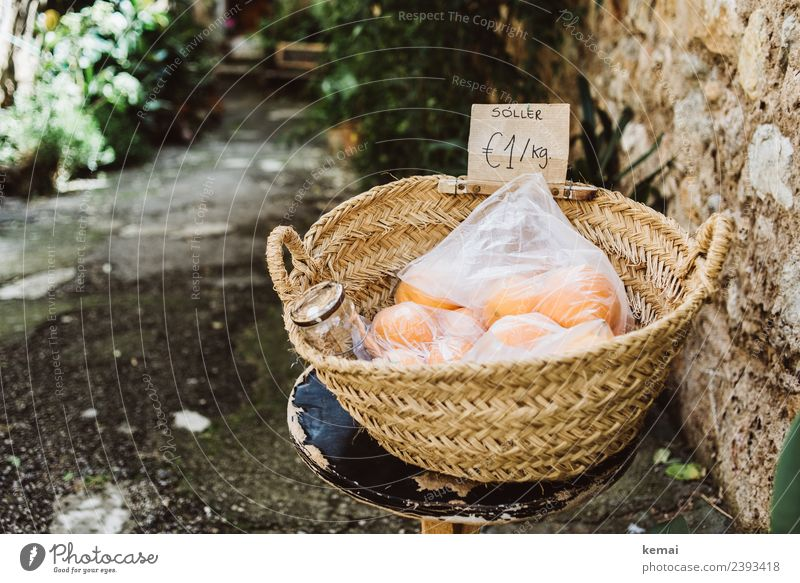 orange Fruit Orange Nutrition Picnic Organic produce Vegetarian diet Slow food Harmonious Well-being Relaxation Calm Leisure and hobbies Vacation & Travel