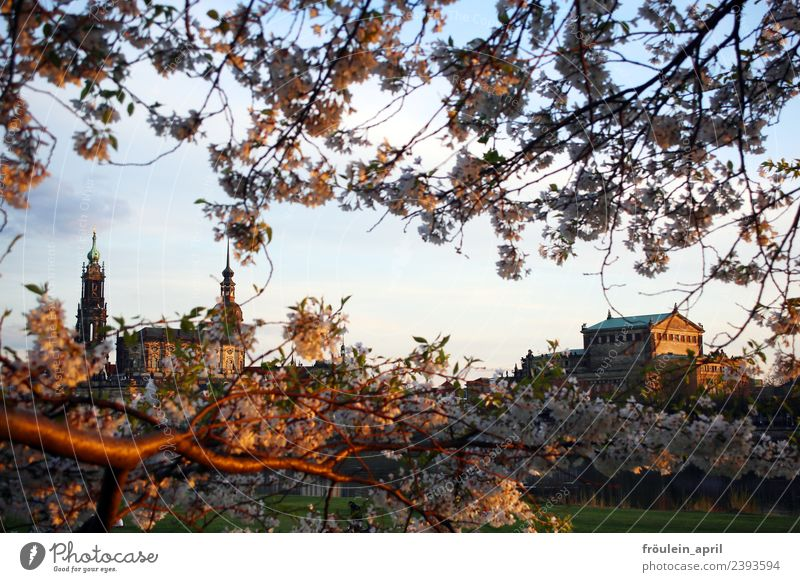 Said through the branches Culture Opera house Nature Landscape Spring Beautiful weather Blossom Apple tree Fruit trees Park River bank Dresden Germany Saxony