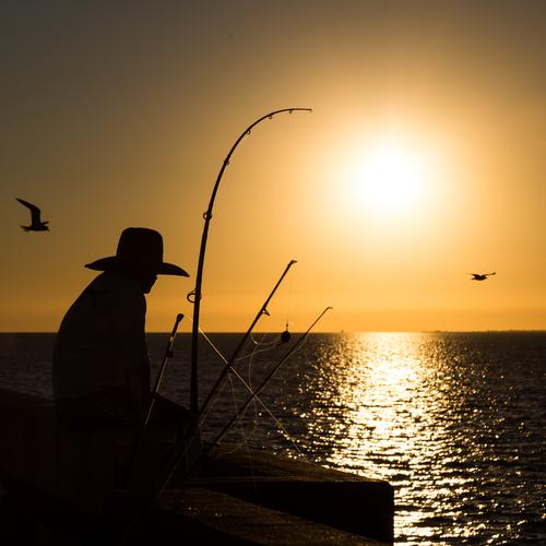 Relax Leisure and hobbies Fishing (Angle) Vacation & Travel Man Adults 1 Human being Sky Horizon Sun Sunrise Sunset Summer Ocean Florida USA Americas