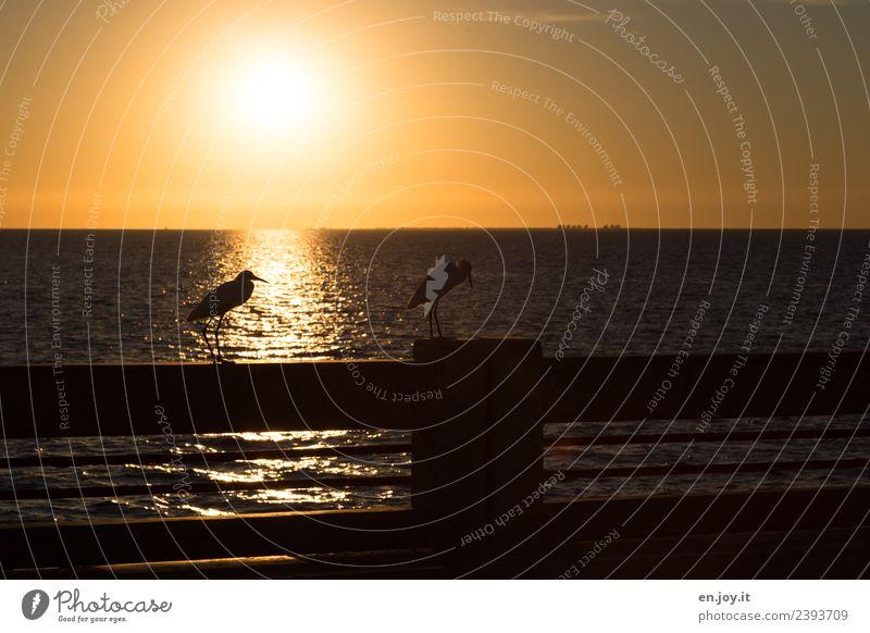 right after work Vacation & Travel Summer Summer vacation Sun Sunbathing Ocean Landscape Cloudless sky Horizon Sunrise Sunset Sunlight Florida Bird Ibis 2