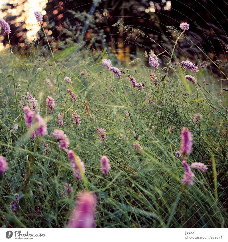 Nature Green Beautiful Plant Summer Flower Landscape Meadow Grass Spring Garden Growth Idyll Violet Wilderness
