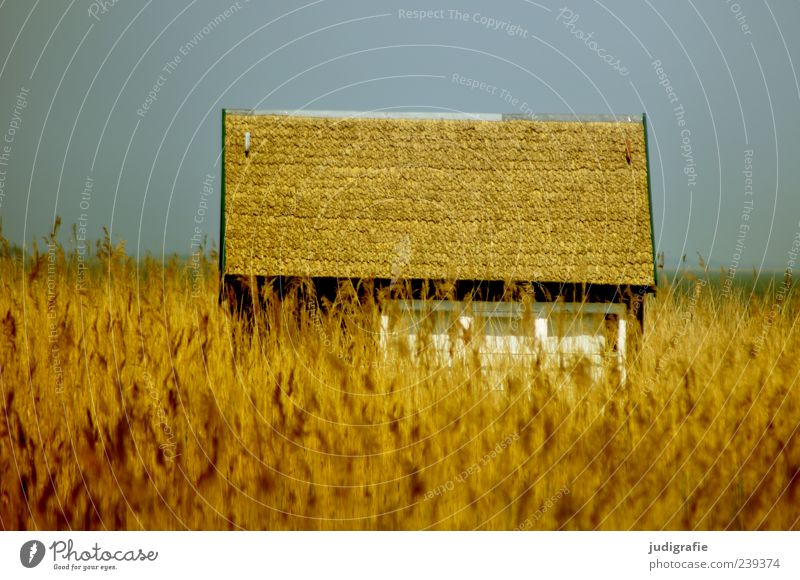 Sky Nature Plant Summer Calm House (Residential Structure) Environment Landscape Coast Building Moody Field Gold Exceptional Natural Living or residing