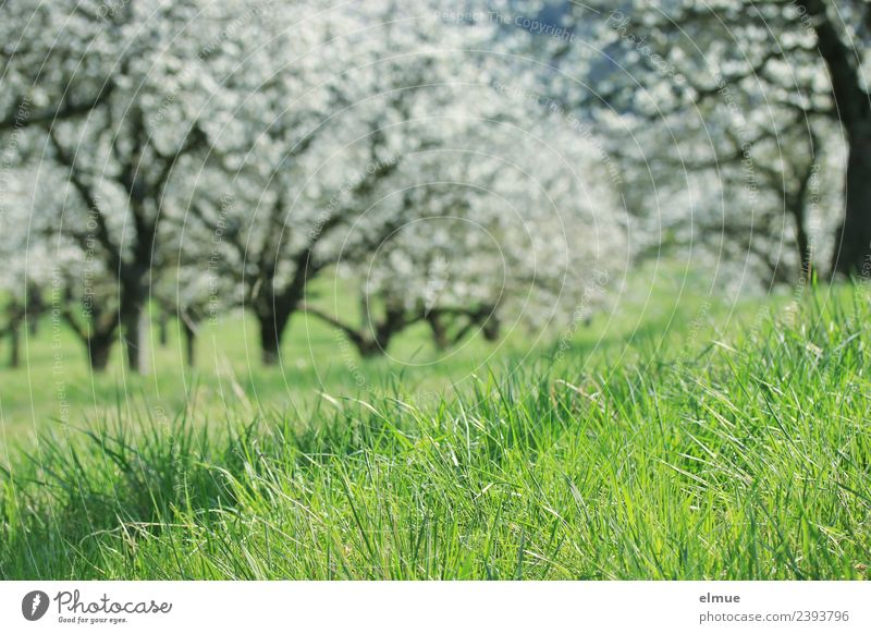 Nature Plant Green White Tree Environment Spring Blossom Lanes & trails Meadow Grass Happy Bright Growth Joie de vivre (Vitality) Beginning