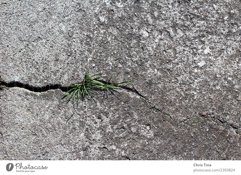 Something green in horror Nature Plant Earth Grass Stone Concrete Observe Growth Gray Green Modest Beginning Environment Colour photo Exterior shot Close-up