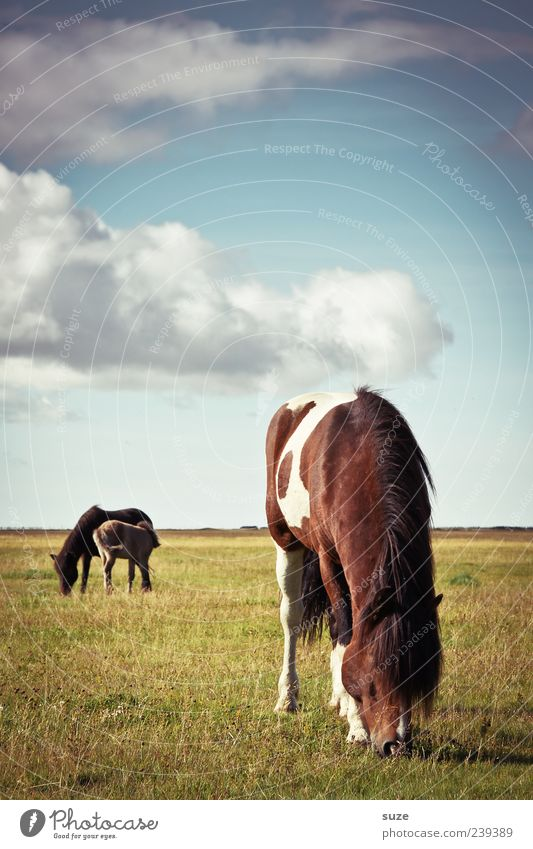 Sky Nature Summer Animal Far-off places Environment Landscape Meadow Climate Wild animal Stand Group of animals Horse Beautiful weather Friendliness Pasture
