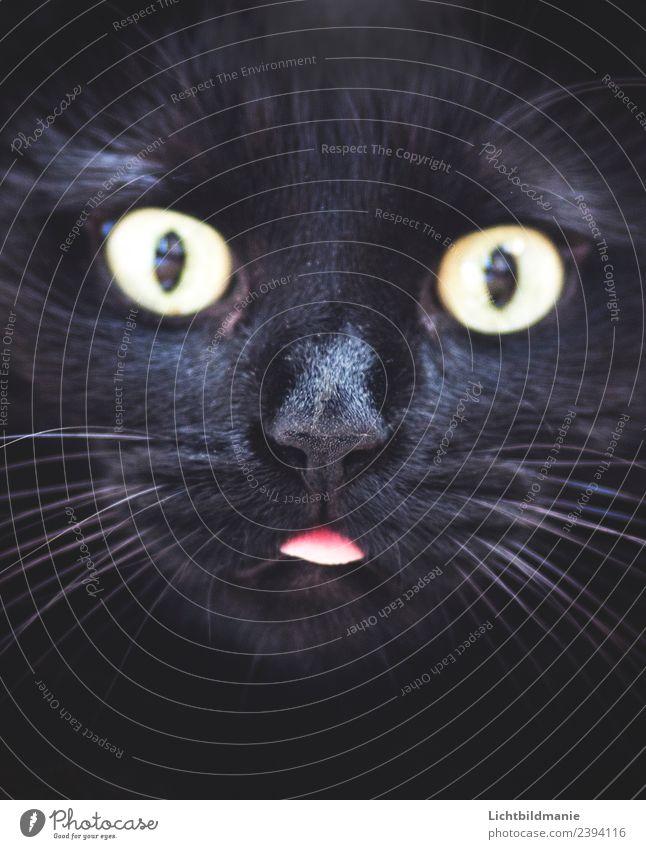 Cat Animal Dark Black Funny Natural Together Communicate Uniqueness Cute Observe Curiosity Pet Trust Pelt Surprise