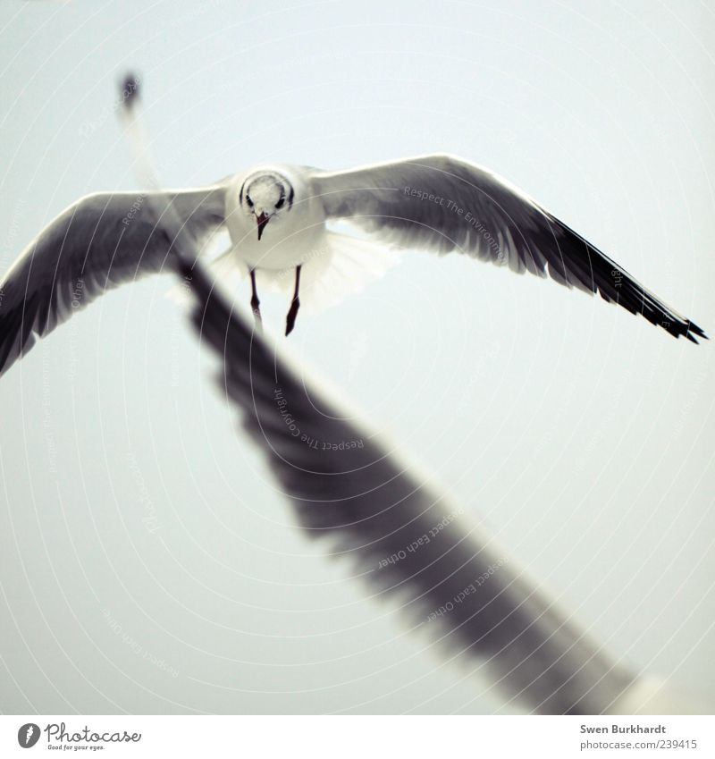Sky Nature White Vacation & Travel Animal Black Environment Movement Gray Air Legs Bird Flying Wild animal Wing Feather