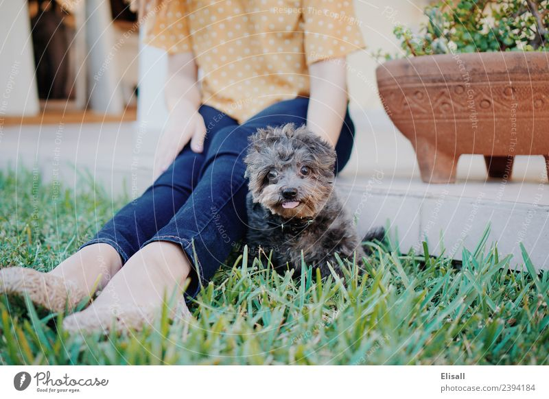 Woman petting her pet dog Human being Nature Dog Plant Animal Joy Adults Lifestyle Spring Emotions Grass Happy Garden Together Moody
